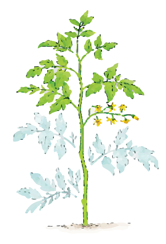 Illustration of dust covered plant leaves